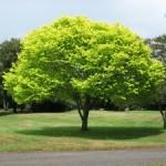 tree-300x225